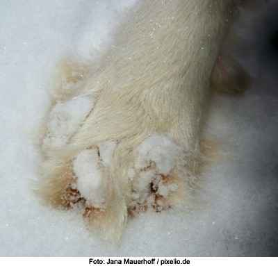 Pfoten im Schnee