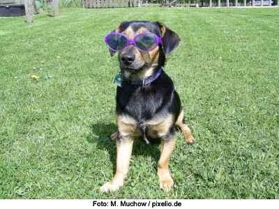 Hund Sonnenbrand vorbeugen