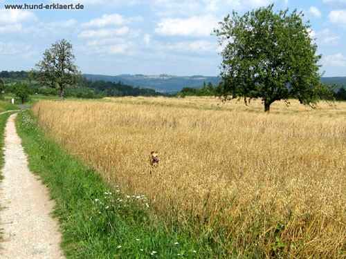 Hundesuchbild www.hund-erklaert.de