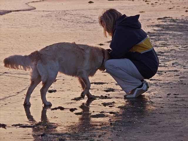 hund begruessung