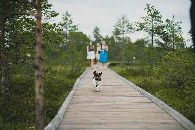 Hunde und Freundschaft - untrennbar verbunden