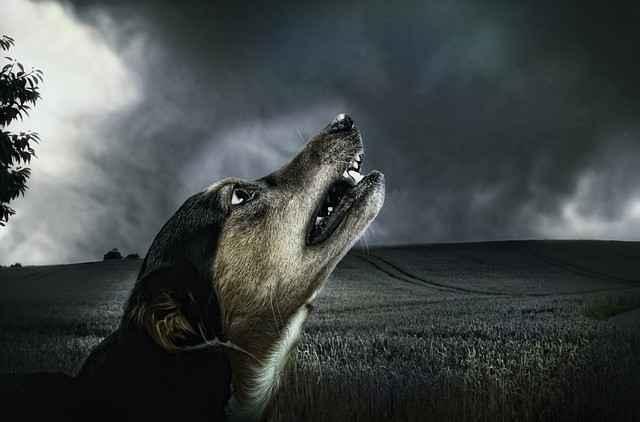 Hund bei Gewitter