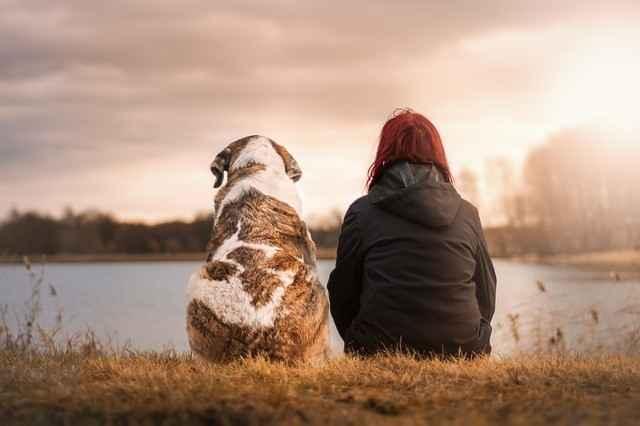 Hund und Mensch im Alltag
